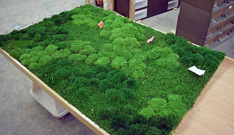 Take a look at how the different colors of moss blend together to achieve an aesthetically pleasing work of art.